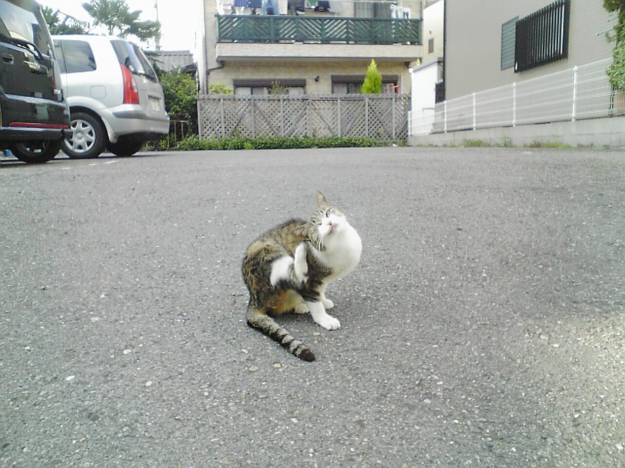 この後、この猫はひたすら撫でられたという・・・